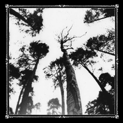 ANCESTORS BLOOD - WHEN THE FOREST CALLS (CD)